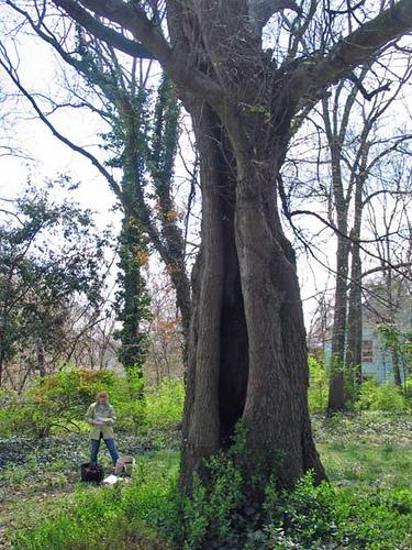 Treehollow